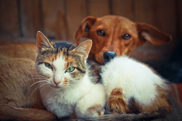 Cats and Dogs Can be Infected by Novel Coronavirus but Appear Unlikely to Pass It to People