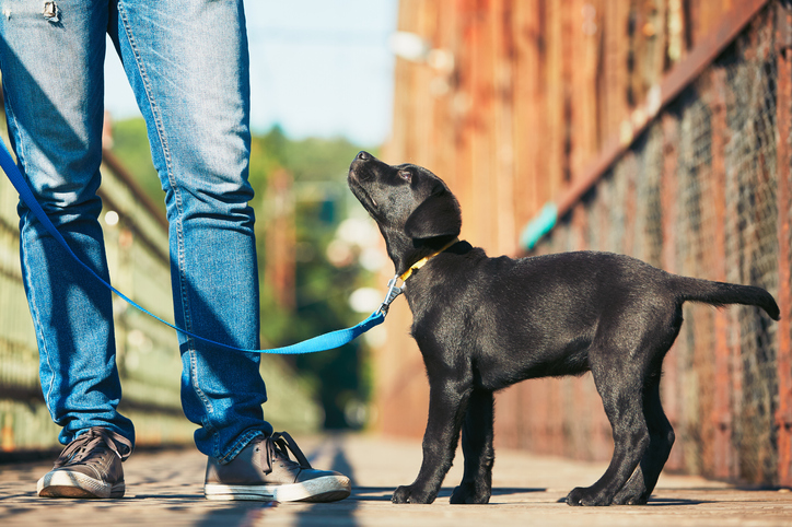 AVMA Offers Pandemic Advice for Socializing Dogs