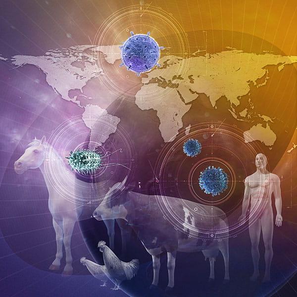 Quizzes - Merck Veterinary Manual