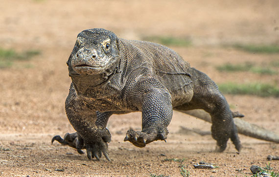 Novel Antimicrobial Proteins Found in Komodo Dragon Blood